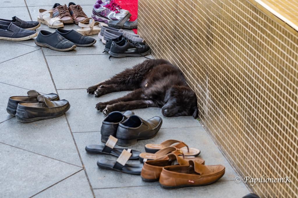 sleeping dog in Bhutan