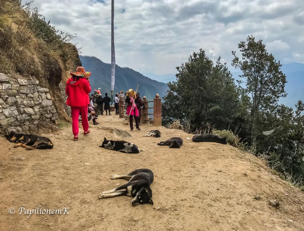 sleeping dogs in Bhutan
